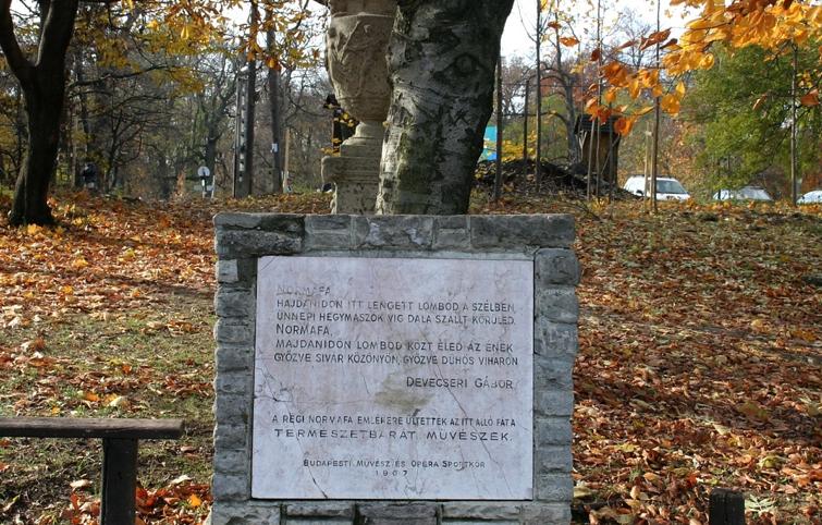 Old Normafa Tree Memorial