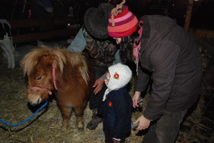 Pony at the Budapest Christmas Fair